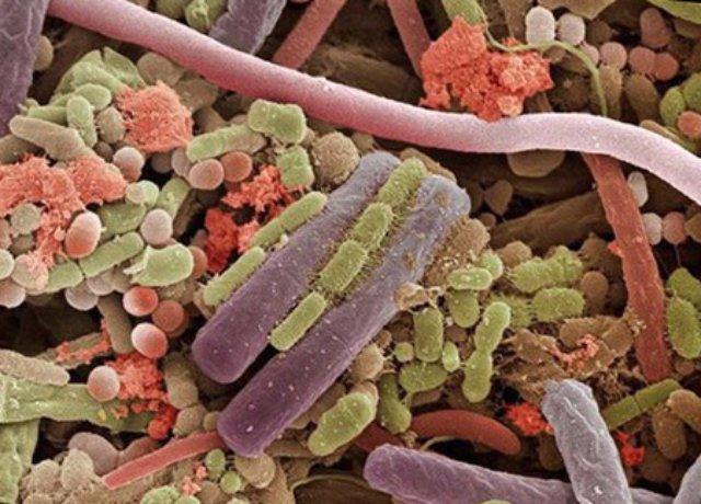 Бактерии на языке человека