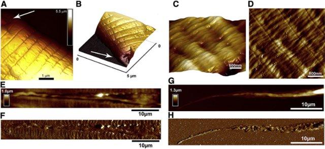 Ученые КФУ сделали 3D-фото червей через микроскоп