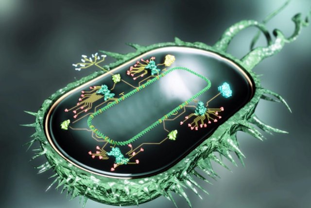 «Бактерии-киборги» - новейшая разработка американских ученых