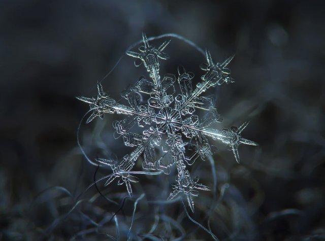 Белые снежинки