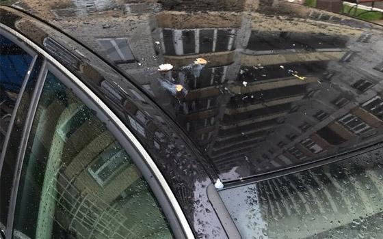 В Брянске закидали яйцами Audi «оленя парковки»