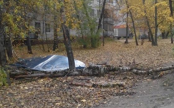 В Брянске дерево рухнуло на остановку