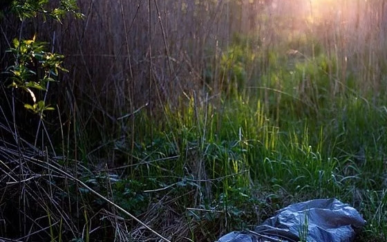 Братья из Дубровки в лесу до смерти забили обидчика матери