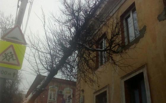 На улице Фокина в Брянске дерево упало на жилой дом