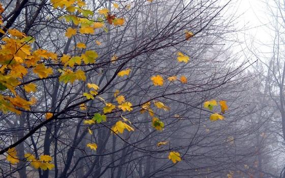 В Брянской области прогнозируют сильный ветер