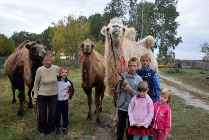 В Белгородской области начали разводить верблюдов