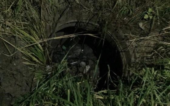 «Справедливороссы» украсили котиками текущую канализацию у «Брянконфи»