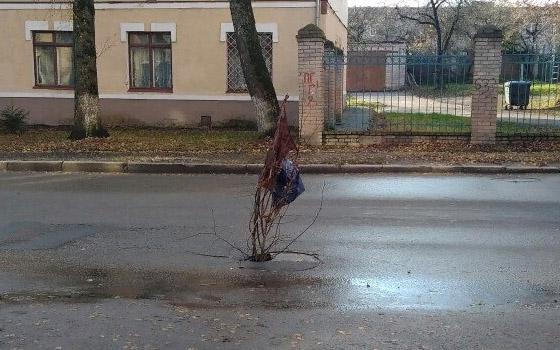 Дыру в люке в центре Брянска обозначили веткой с пакетом и тряпкой