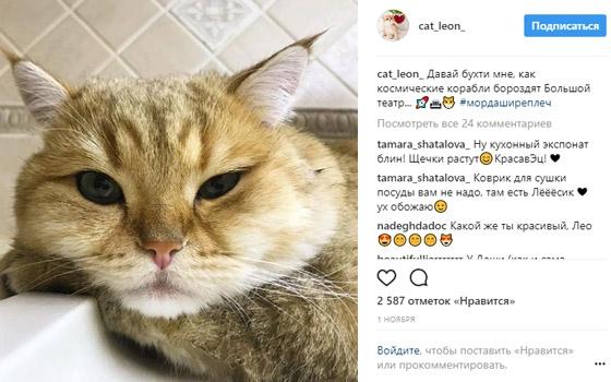 Кот Леон из Брянска собрал 55 тысяч подписчиков в Instagram