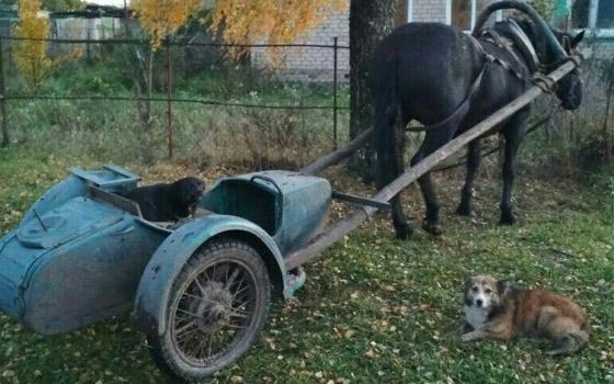 «Аве, Цезарь!»: в Брянске сфотографировали мотоколесницу