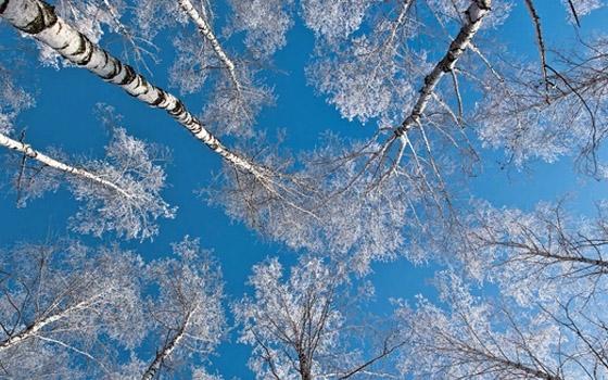В Брянской области установилась минусовая температура