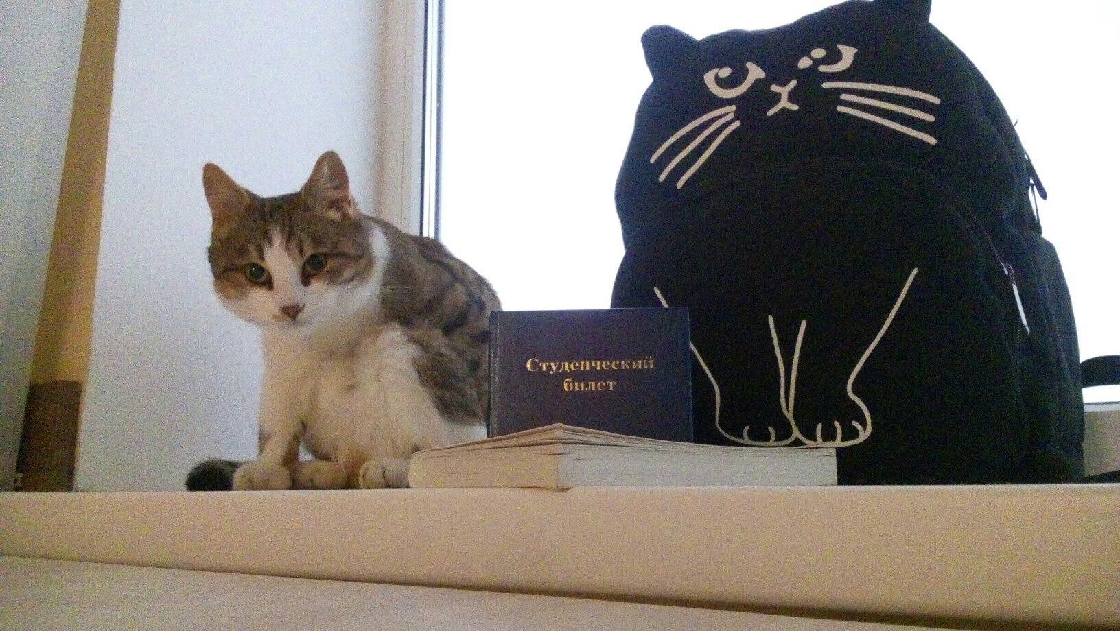 В ботаническом саду НИУ «БелГУ» будет жить кот Полуша