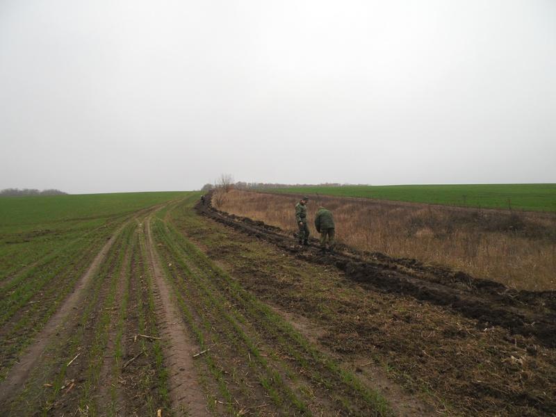 В Белгородской области высаживают «зелёную границу» с Украиной