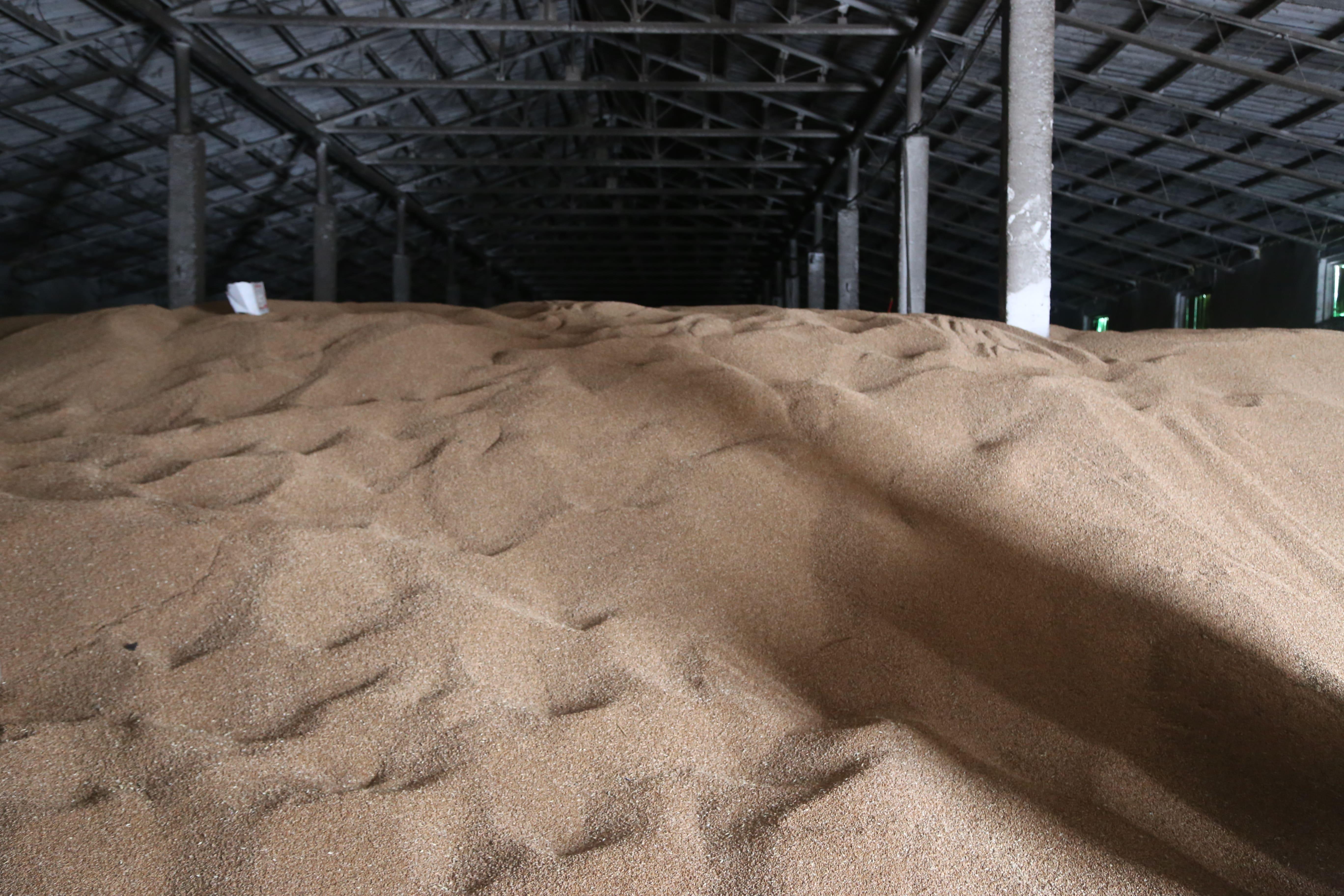 Заработать на земле. Как белгородские фермеры добились рекордного урожая? [партнёрский материал]