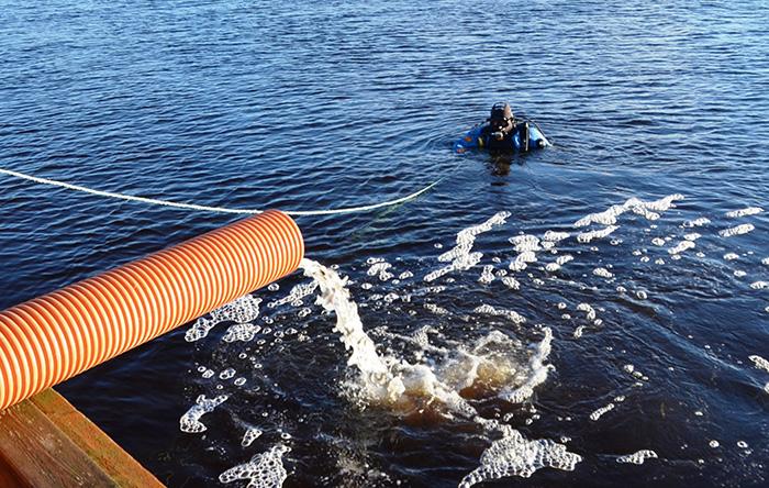 Вологодские ученые выпустили молодь сига в Онежское озеро
